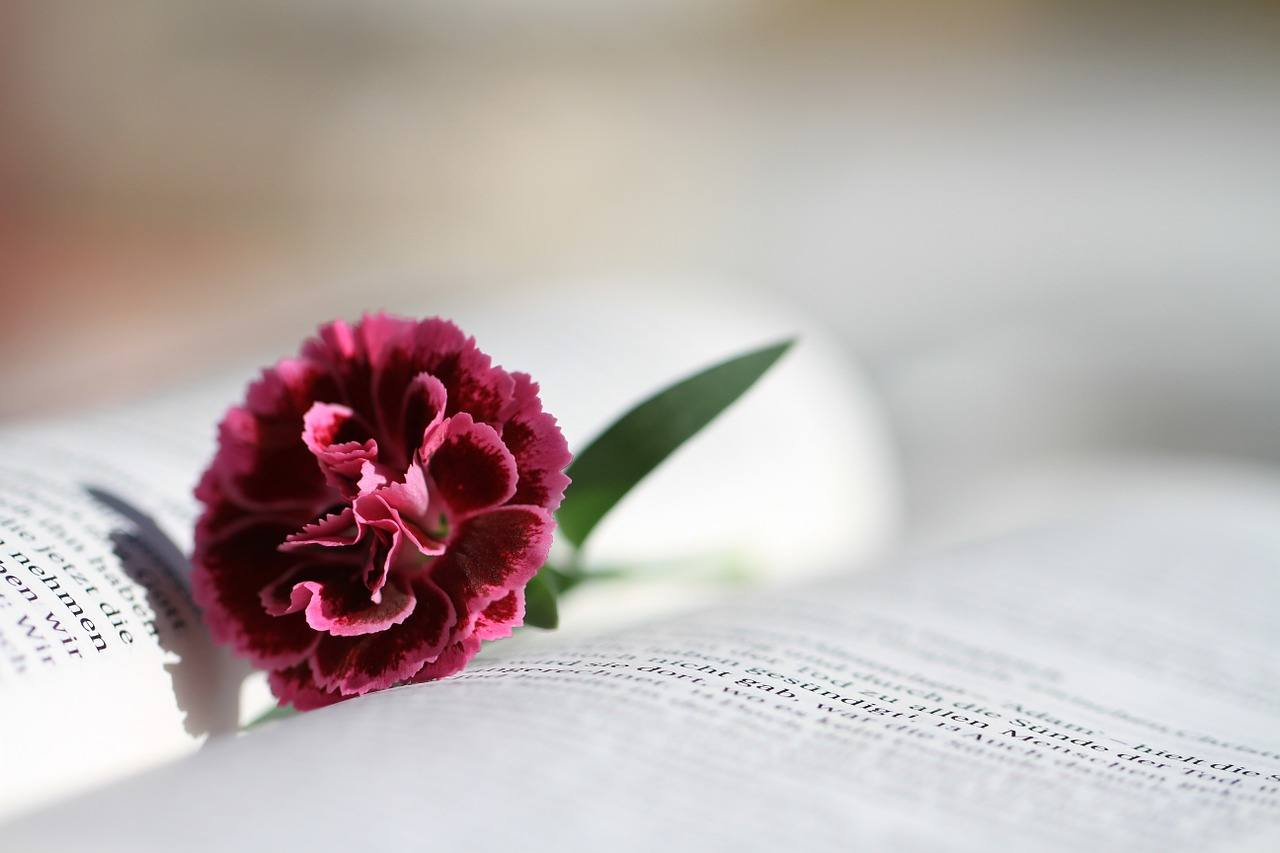 open book with red carnation on top