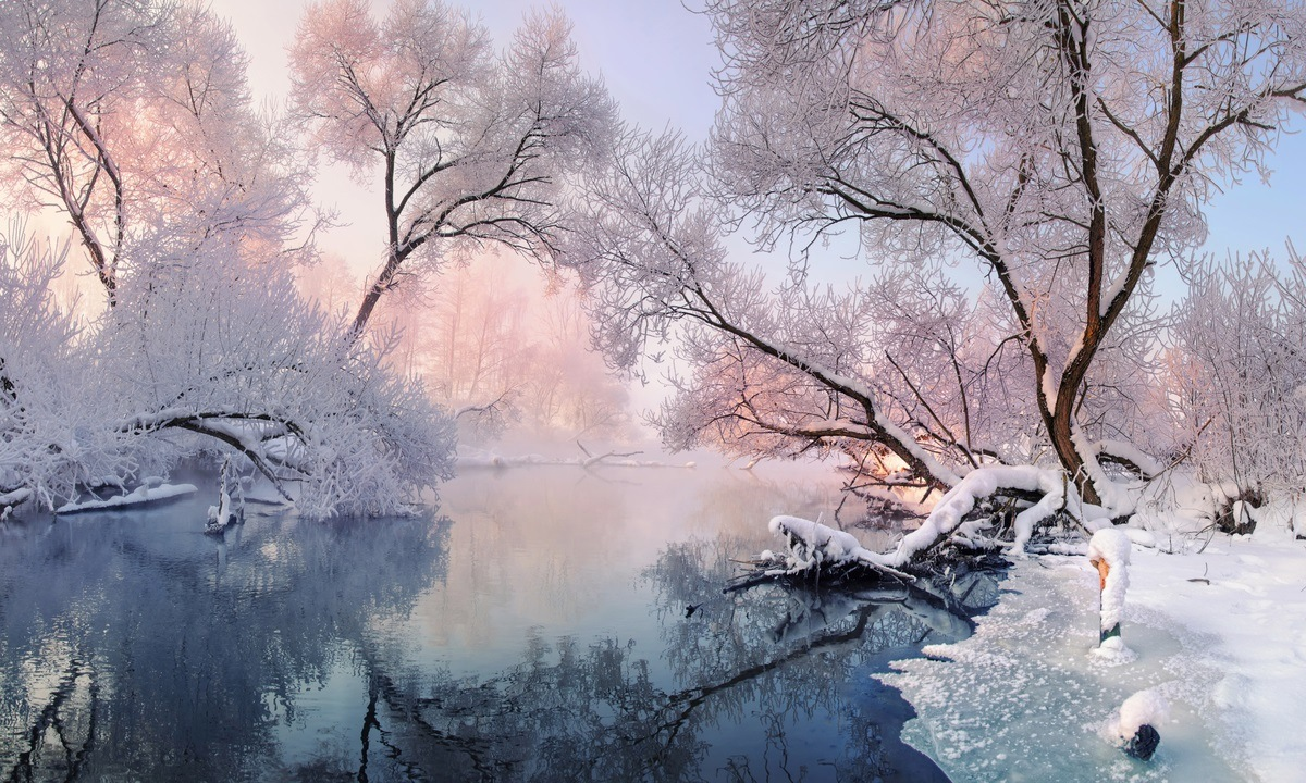 beautiful forest landscape covered in snow next to a river