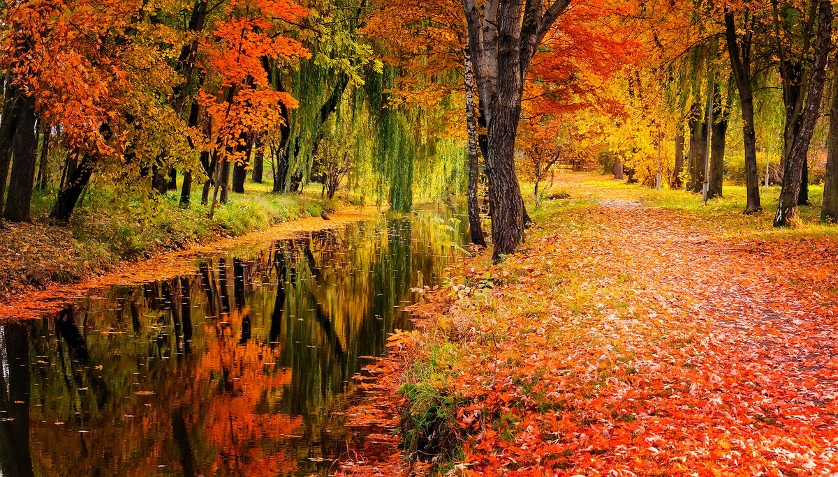 beautiful landscape photo in fall season